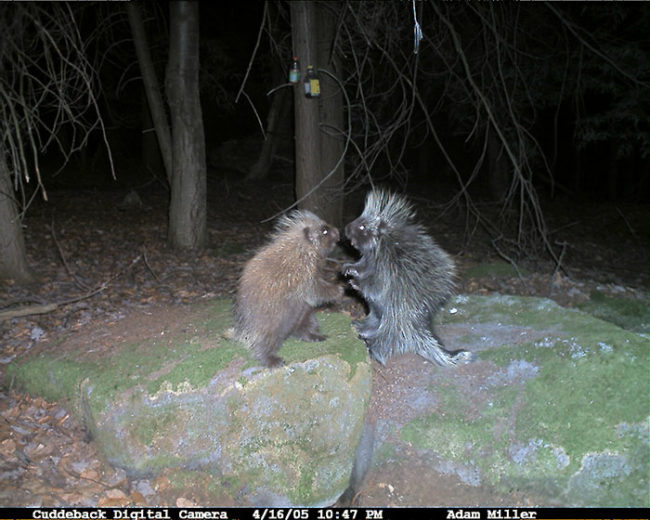 Zwierzęta nocą w lesie