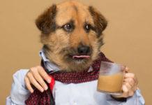 Pies ubrany w koszuli pije kawę.