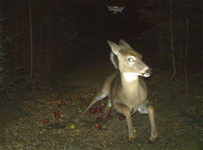 Sarna nocą w lesie
