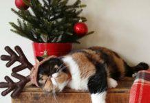 Kot ubrany w rogi renifera, leżący pod choinką