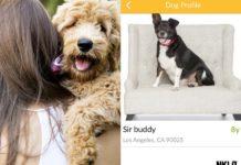 Kobieta z psem na ręku a obok zrzut z apliakcji do randkowania z psami