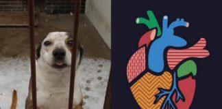 Pies w schronisku i logotyp klubu Serce