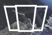 Logotyp klubu smolna