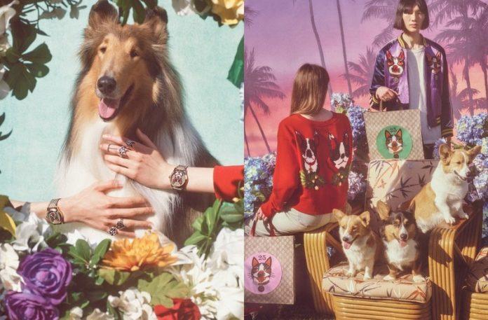 Zdjęcia promujące kolekcję Gucci z psami