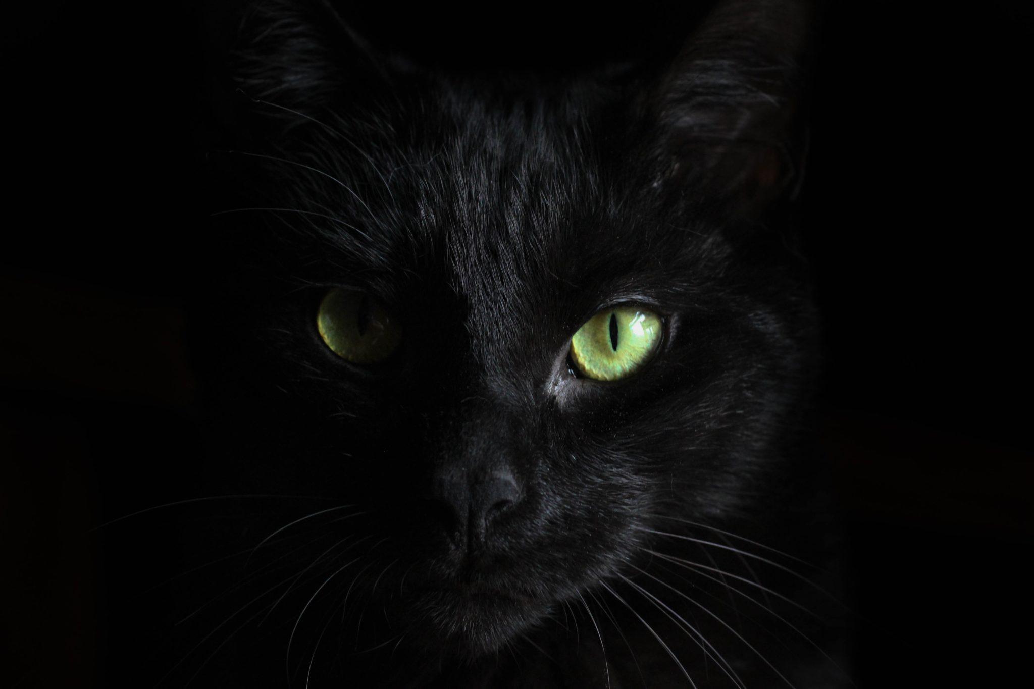 Pysk czarnego kota z zielonymi oczami pokazany na czarnym tle