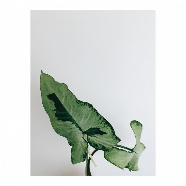 zielony lisc na tle bialej sciany