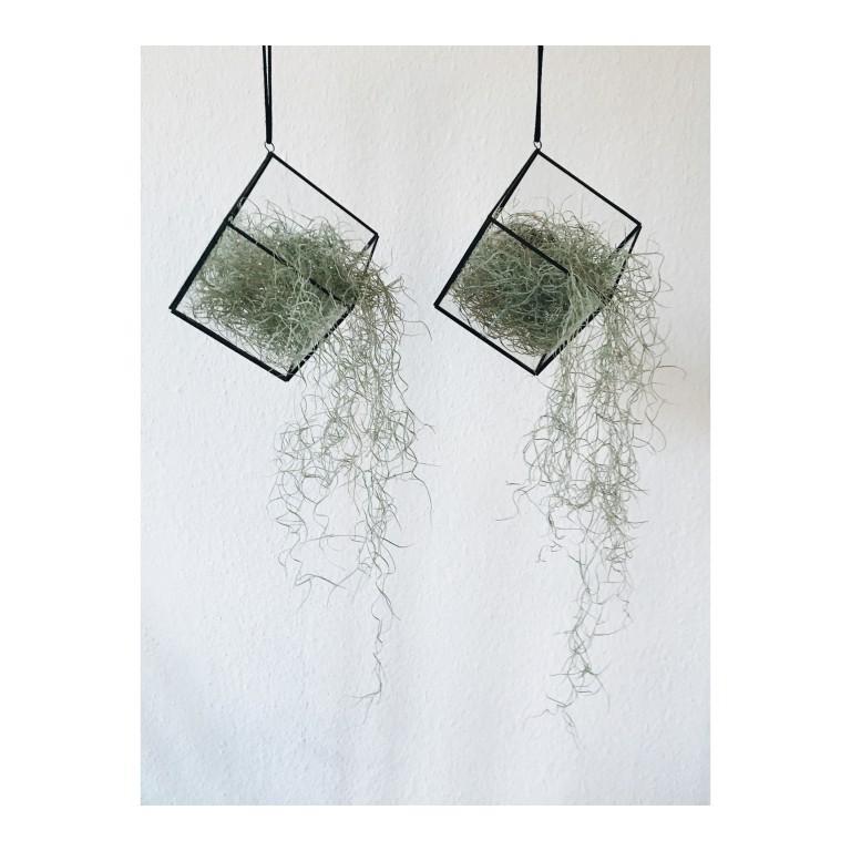 rosliny w szkalych terrariach wiszace na tle bialej sciany