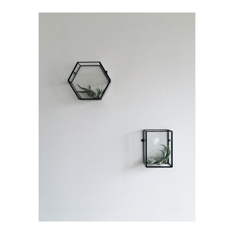 zdjecie przedstawia szklane terraria z roslinami