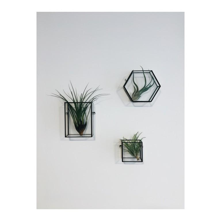 zdjęcie przedstawia rośliny w szklanych terrariach