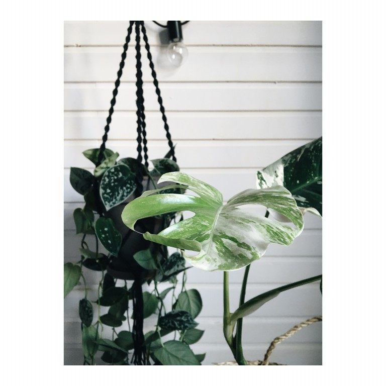 zielone rosliny na podwieszanej donicy