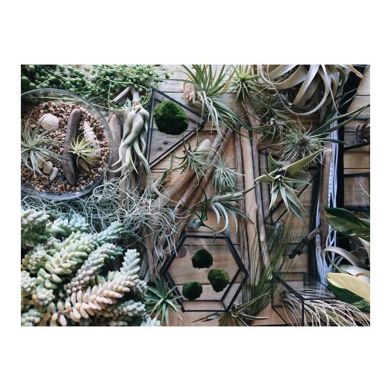 sukulenty, kaktusy zielone rosliny na drewnianym tle