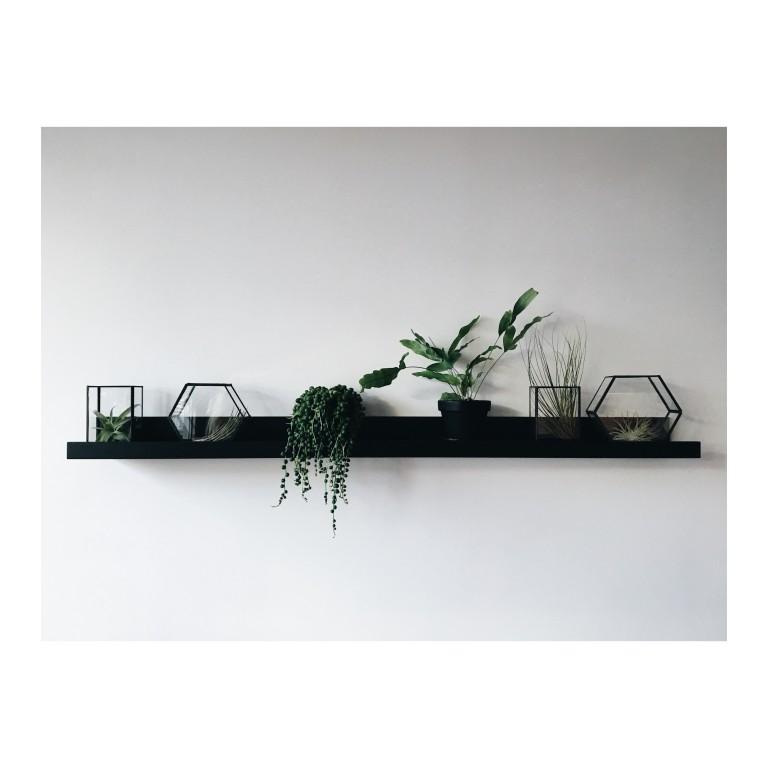 Zdjacie przestawia polke z wieloma roslinami w szklanych terrariach