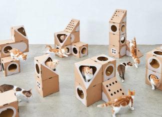 Dużo kotów w otoczeniu kartonowych pudełek