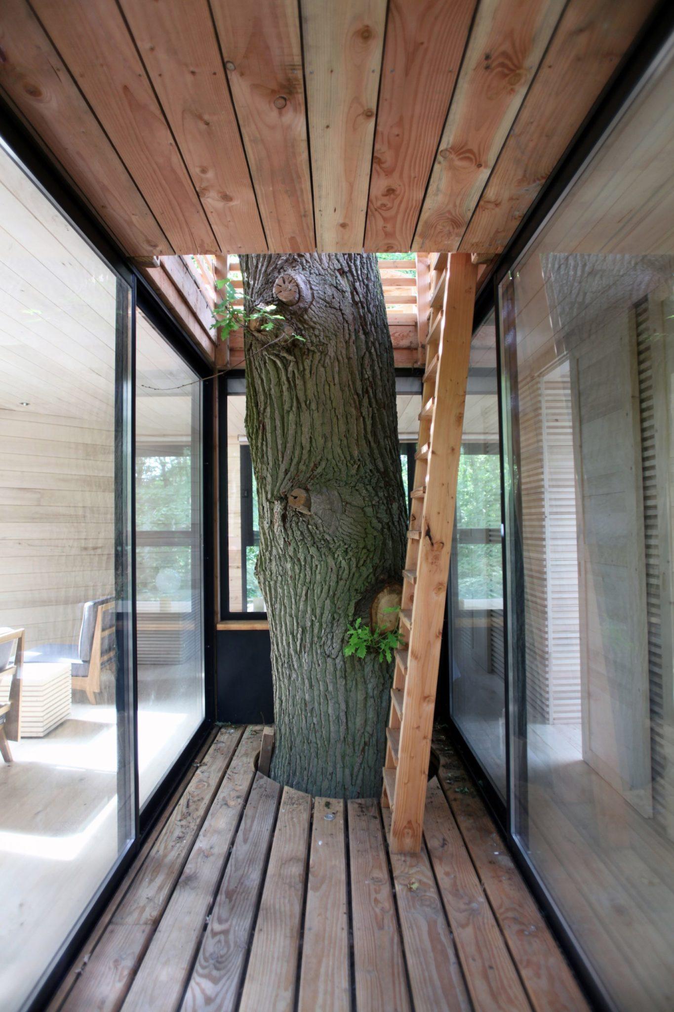 Pień wewnątrz domku na drzewie