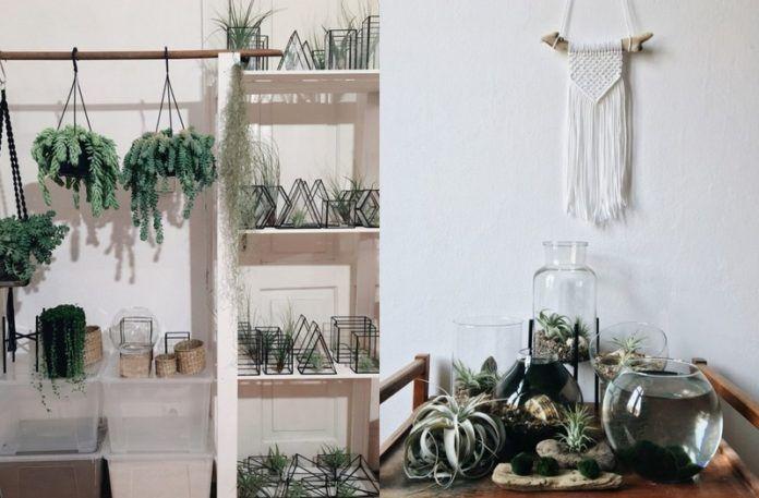 Dwa zdjęcia przedstawiające rośliny w terrariach i doniczkach