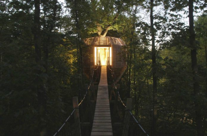 Domek na drzewie w środku lasu