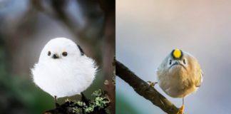Zdjęcia przedstawiające dwa ptaki