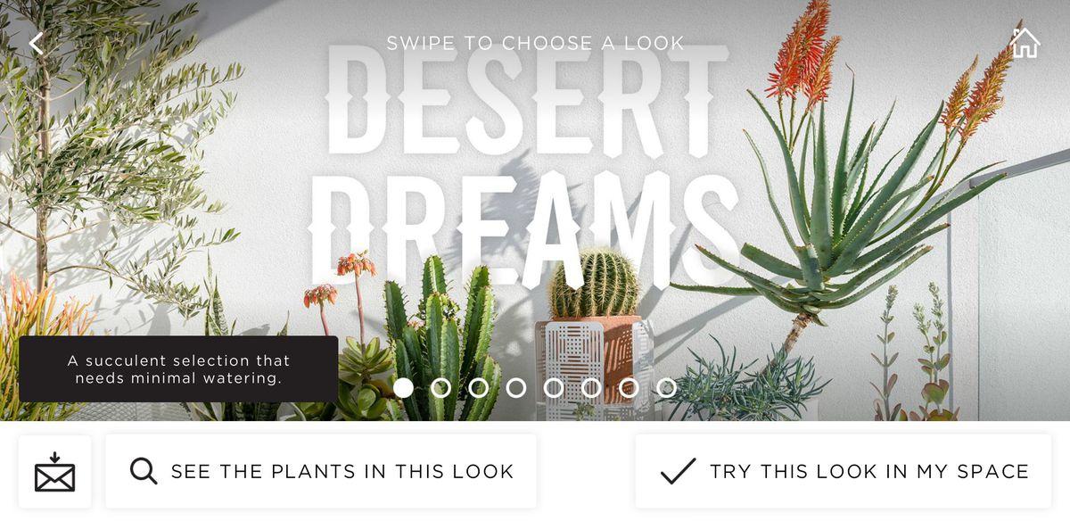 Zdjęcie ekranu aplikacji. Napis Desert Dreams i rośline zielone na tle białej ściany.