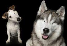 Dwa niepełnosprawne psy