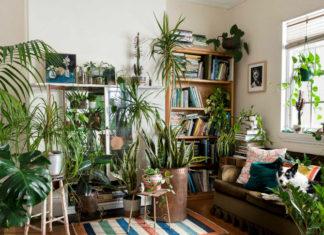 Wnętrze salonu z dwoma regałami na książki, sofą, na której leży pies, wypełnione dużą ilością roślin zielonych.