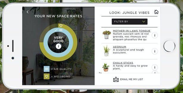 Zrzut ekrany aplikacji. Diagram z jakością powietrza i samopoczuciem, zdjęcia trzech roślin zielonych z opisem.