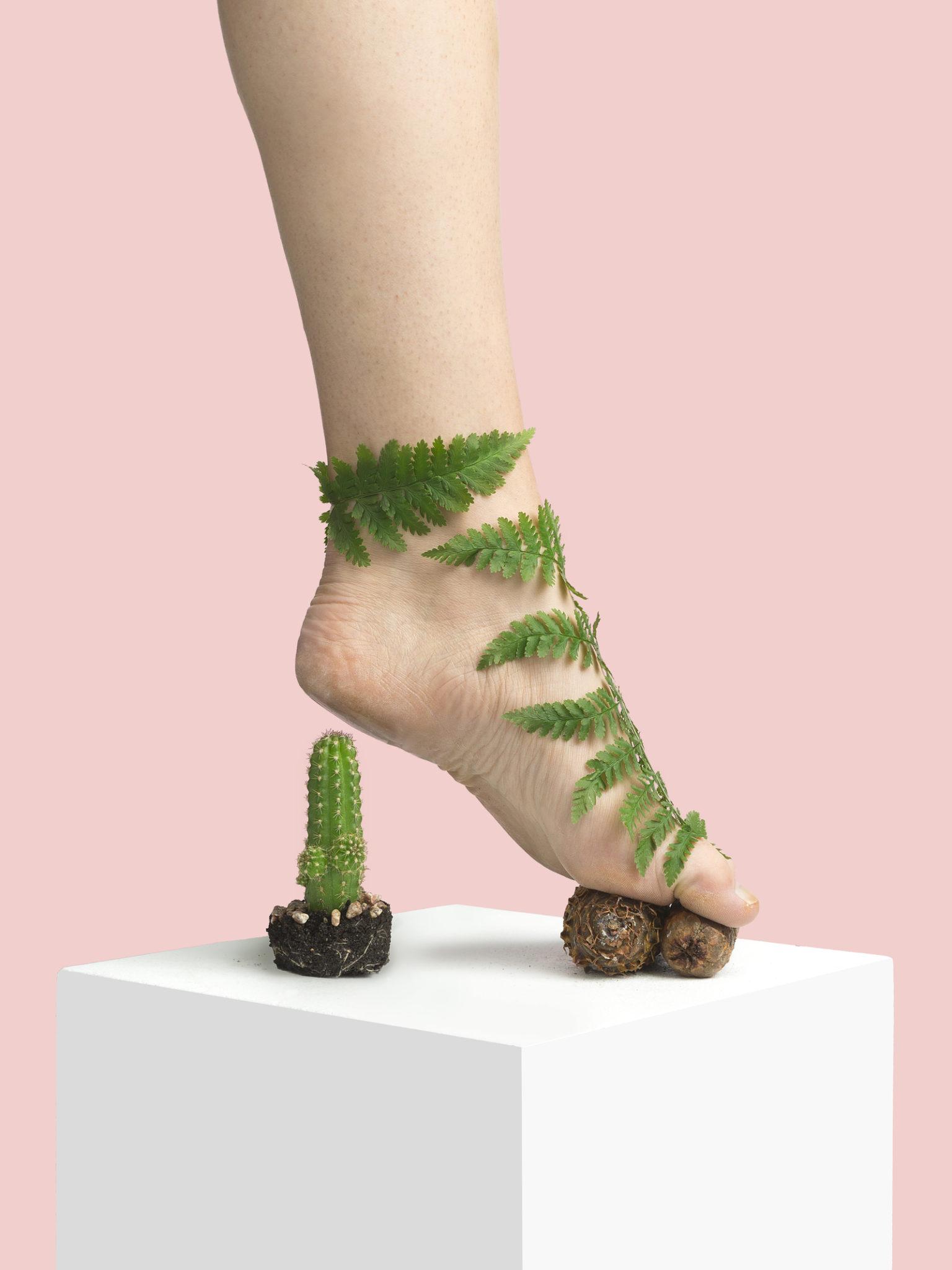 But zrobiony z kaktusa, kamieni i liści paproci