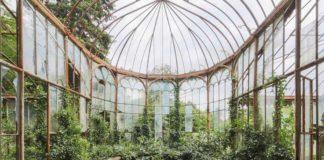 Opuszczona szklana oranżeria porośnięta zielonymi roślinami