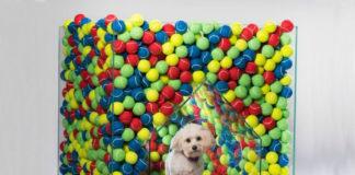 Buda dla psa wypełniona piłeczkami