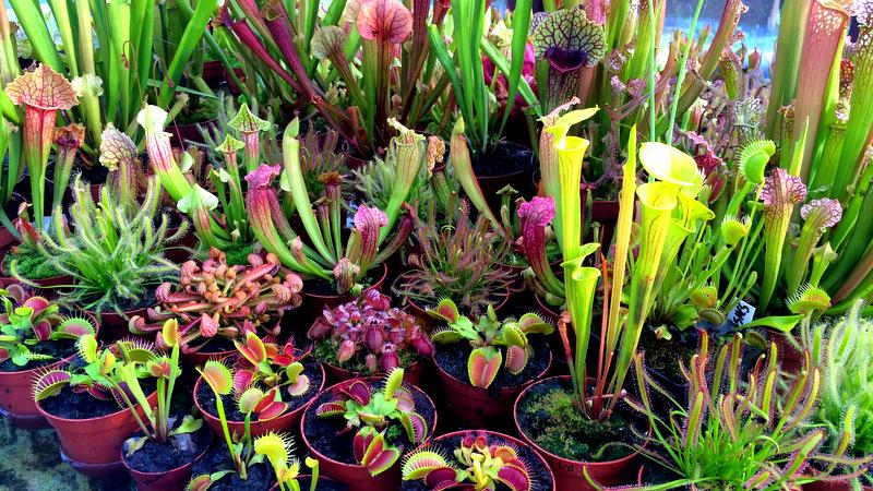 Zdjęcie przedstawiające rośliny