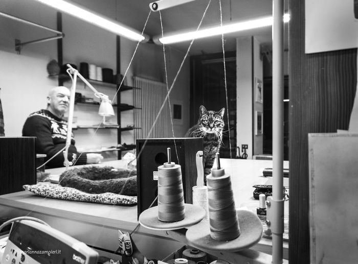 Kot siedzący w pracowni tkackiej