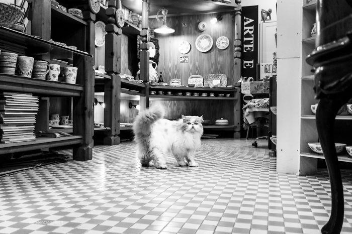 Kot idący po podłodze w restauracji