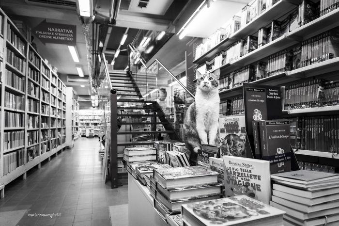 Kot siedzący na książkach
