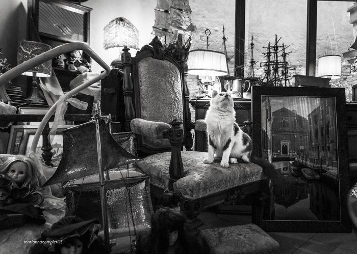 Kot siedzący na krześle