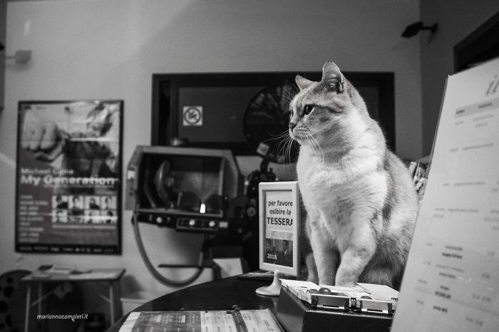 Kot siedzący w biurze