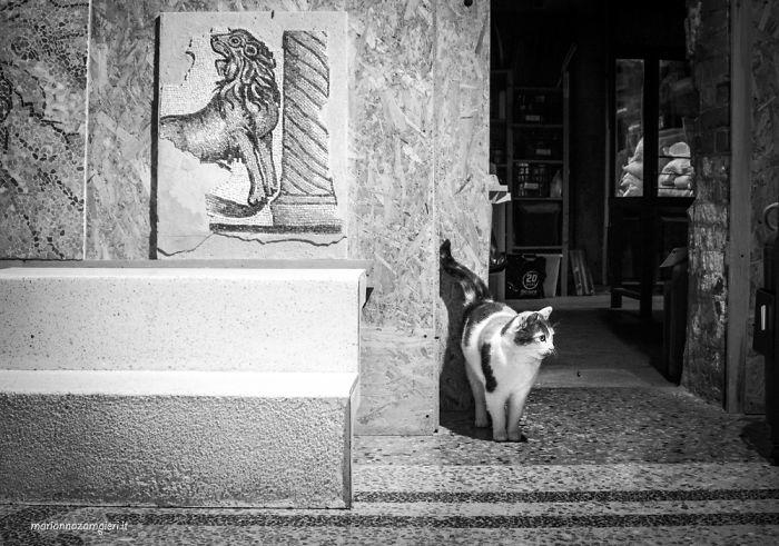 Kot przechodzący obok ulicy