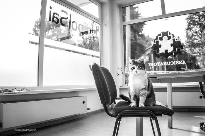Kot siedzący na krześle w biurze