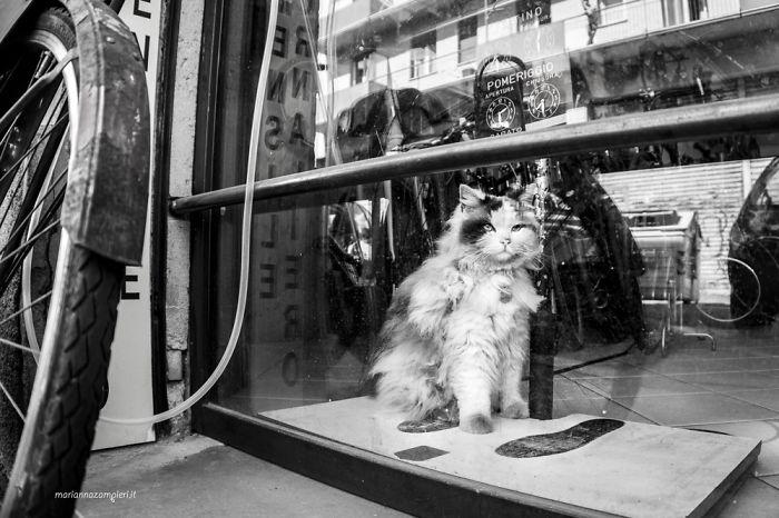 Kot siedzący na oknie