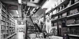 Kot siedzący na książkach w księgarni
