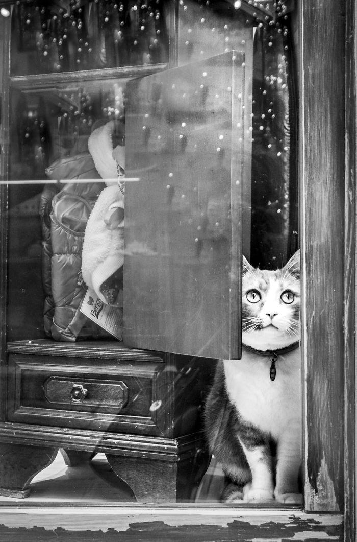 Kot wyglądający przez szybę