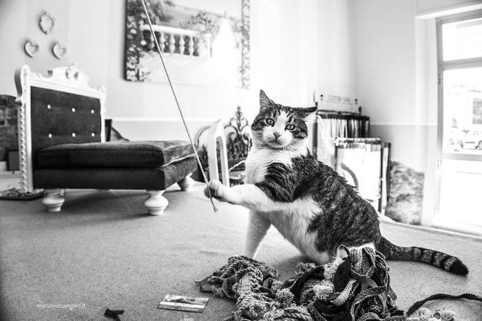 Kot bawiący się patykiem
