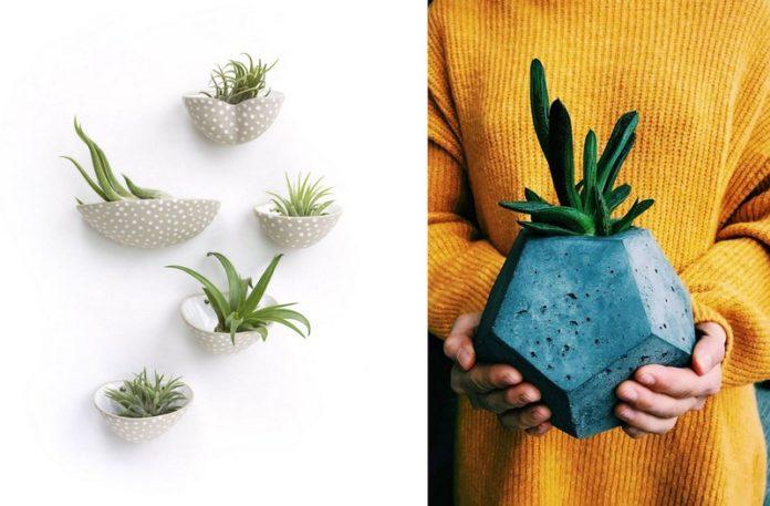 Zdjęcia przedstawiające rośliny na ścianie i ręce trzymające doniczkę