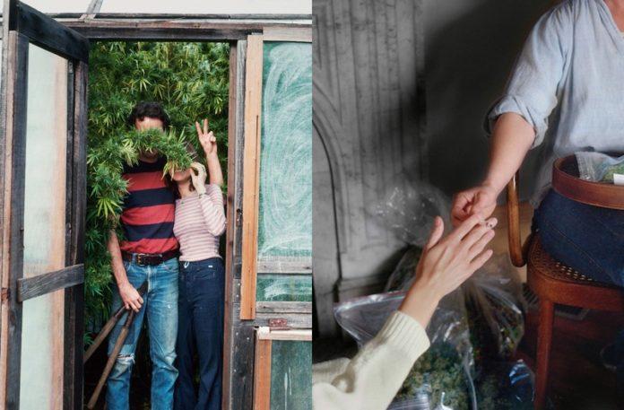 Człowiek schowany za krzewem konopi, a obok ręce podające sobie skręta