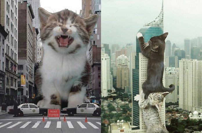 Dwa zdjęcia przedstawiające olbrzymie koty zdobywające miasto
