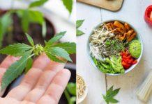 Kwiat konopi, a obok miska z warzywami i ziarnami konopi