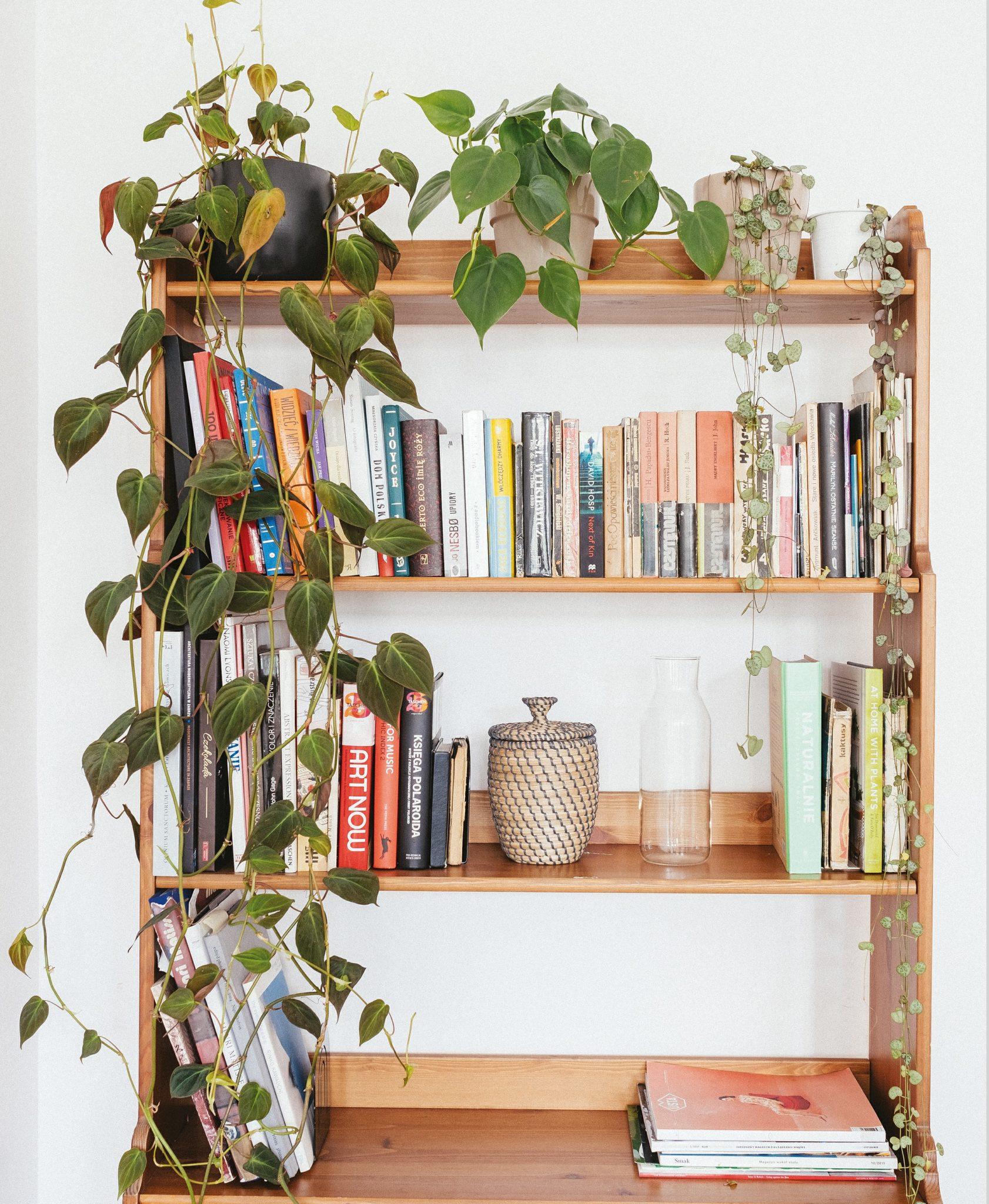 Regał z książkami i oplatająca go roślina