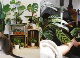 Dwa zdjęcia przedstawiające zielone rośliny