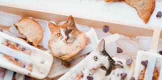 Koty, które zostały sphotoshopowane z jedzeniem