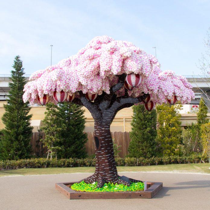 Kwitnące drzewo wiśniowe na tle kilku drzew iglastych.