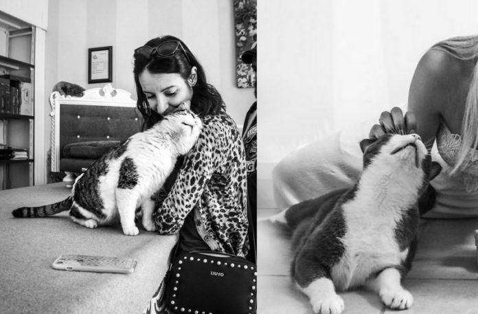Dwa czarno-białe zdjęcia przedstawijace zadowolone koty