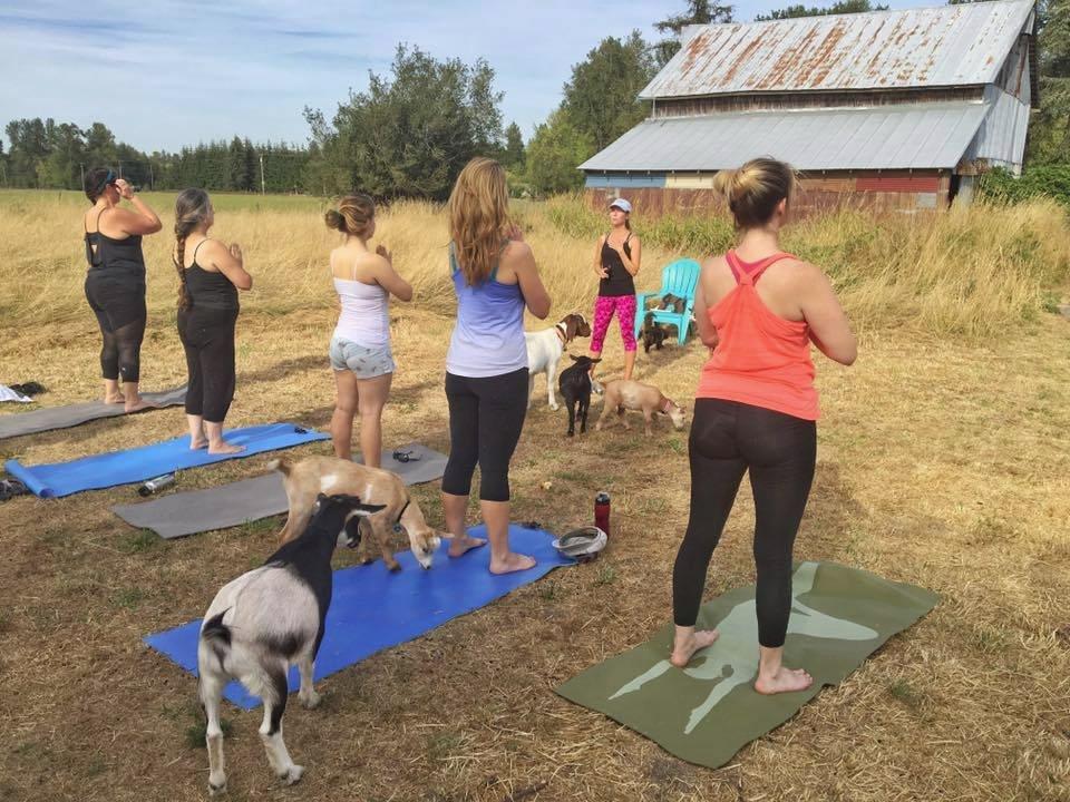 Kozy i osoby ćwiczące jogę
